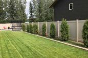 pvc vinyl privacy fence lined with small trees on the inside of backyard
