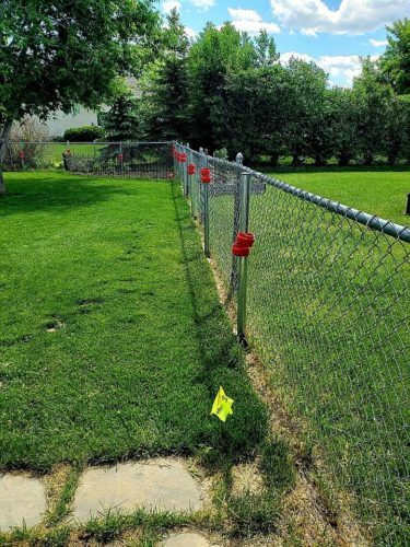 A chain link fence being replaced by a white vinyl fence in a lush green backyard